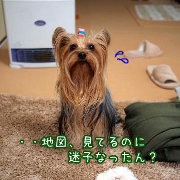 2_20110214164644.jpg
