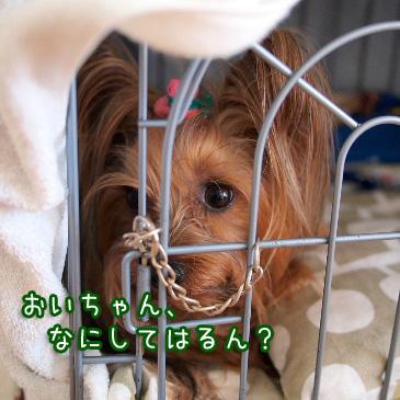 2_20110215193744.jpg
