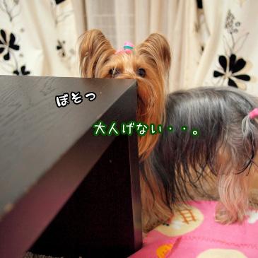 2_20110218190116.jpg