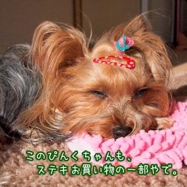 2_20110222091817.jpg