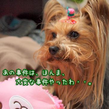 2_20110223191218.jpg