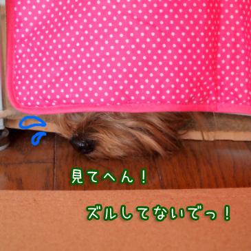 2_20110224185008.jpg