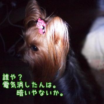 2_20110316122152.jpg