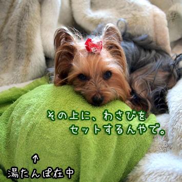 2_20110329181153.jpg