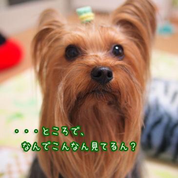3_20110106171626.jpg