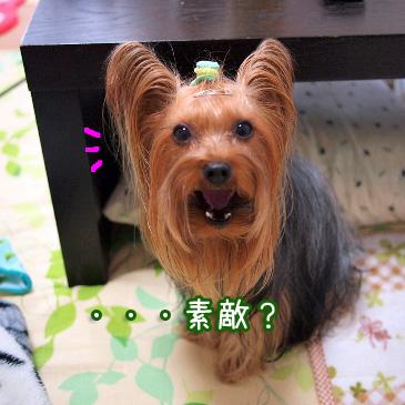 3_20110110172232.jpg