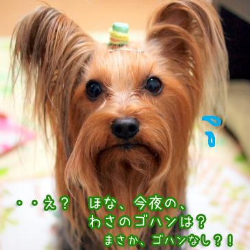 3_20110111184503.jpg
