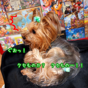 3_20110114194120.jpg