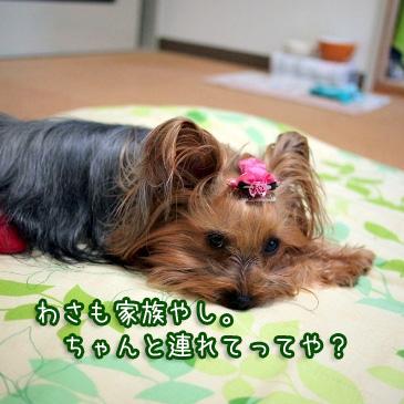 3_20110127200329.jpg