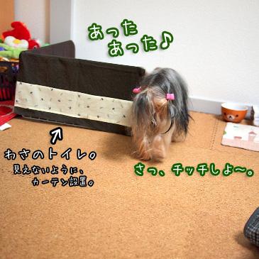 3_20110209193438.jpg