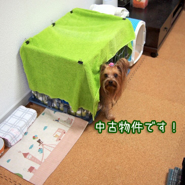 3_20110210161710.jpg