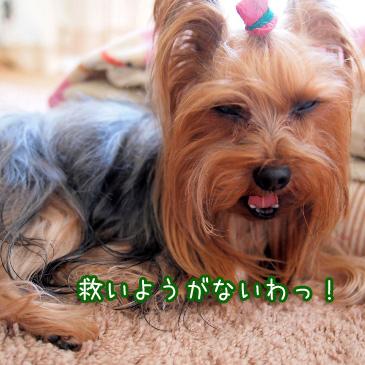 3_20110213190609.jpg