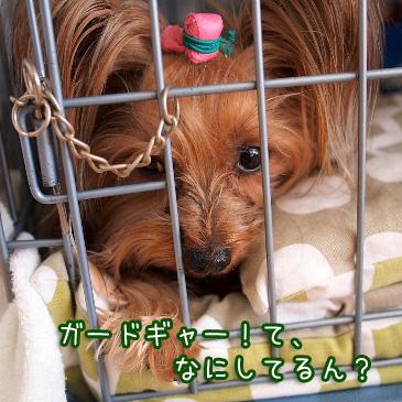 3_20110215193744.jpg