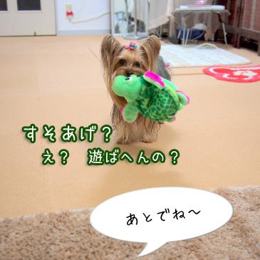 3_20110216191700.jpg