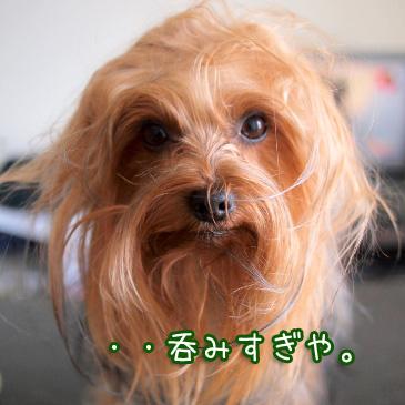 3_20110220191024.jpg