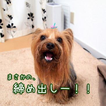 3_20110223191217.jpg