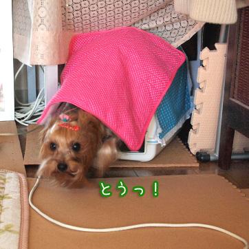 3_20110224185008.jpg
