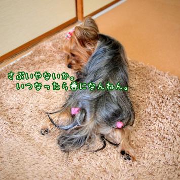 3_20110307194626.jpg