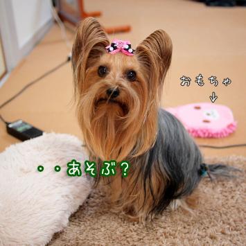 3_20110315093206.jpg