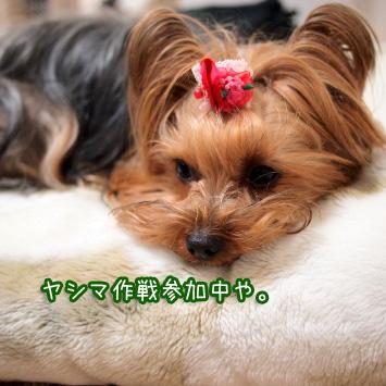 3_20110322105109.jpg