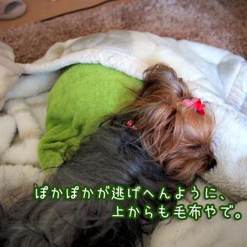 3_20110329181152.jpg