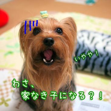 4_20110106171626.jpg