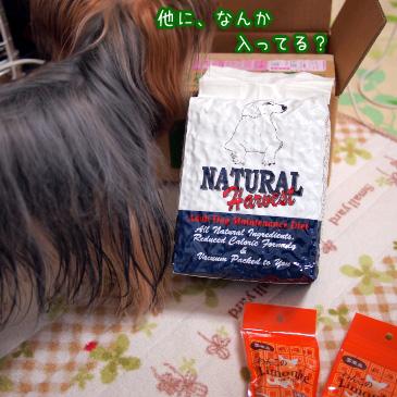 4_20110112193832.jpg
