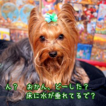 4_20110114194120.jpg