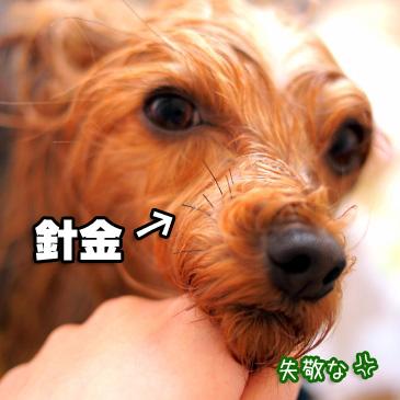 4_20110119174019.jpg