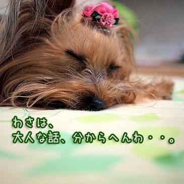 4_20110127200329.jpg