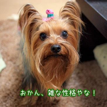 4_20110209193437.jpg