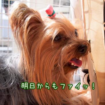 4_20110213190609.jpg