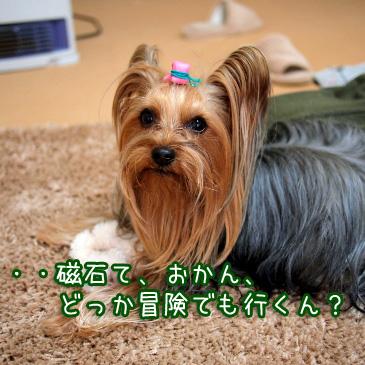 4_20110214164644.jpg