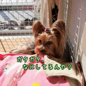 4_20110215193743.jpg