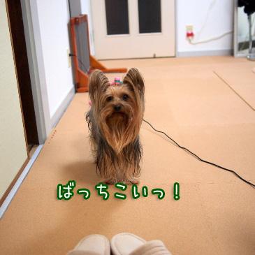 4_20110218190116.jpg