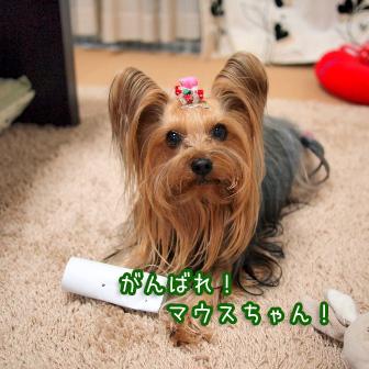 4_20110305095436.jpg