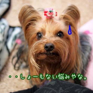4_20110306181056.jpg