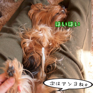 4_20110308155921.jpg