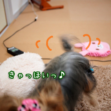 4_20110315093206.jpg