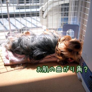 4_20110318183519.jpg