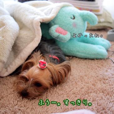 4_20110326195639.jpg