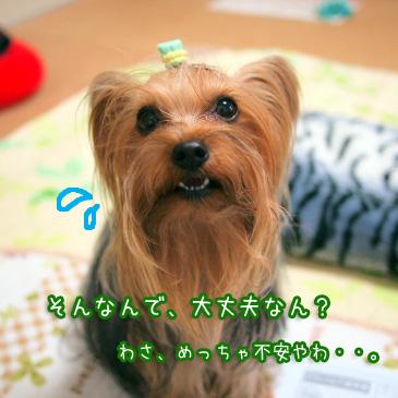 5_20110106171626.jpg