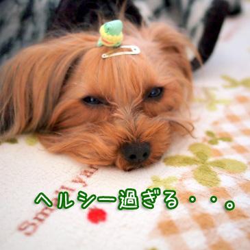 5_20110111184502.jpg