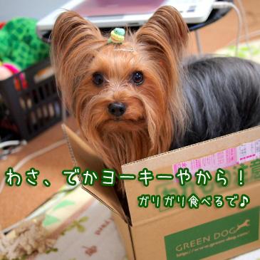 5_20110112193832.jpg