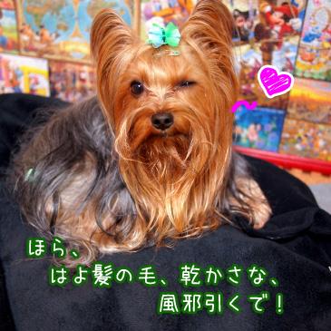 5_20110114194120.jpg