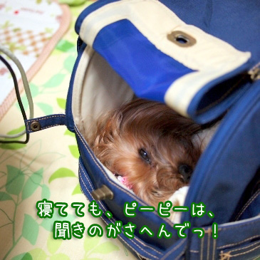 5_20110126191140.jpg