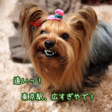 5_20110208191830.jpg