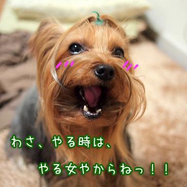 5_20110209193437.jpg