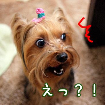 5_20110210161710.jpg