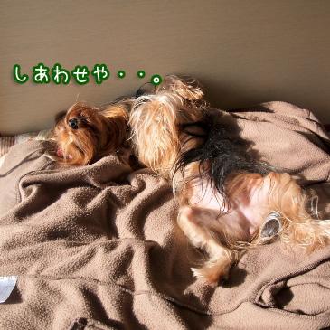 5_20110211194639.jpg